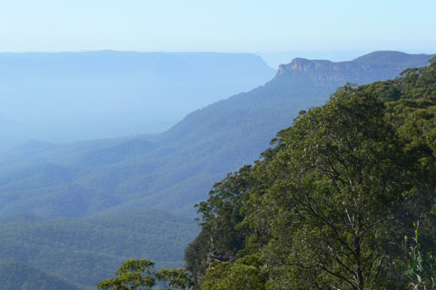 View of the Blue Mountains with trees in the foreground