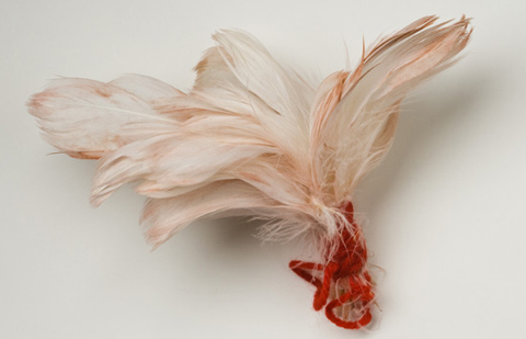 Bunch of feathers tied together with a piece of wool
