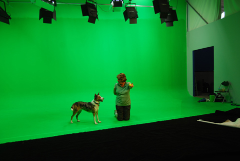 On set with 'Dash' the Australian Koolie.
