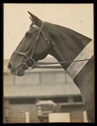 Champion horse Dungog, 1929
