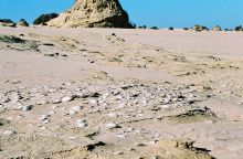 Colour photograph showing sun-bleached shells in the foreground, with sandy dunes stretching to a clear, blue sky.