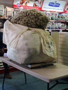 A photo of a large bag of fleece on scales