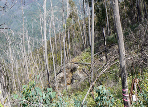 Bush scene showing dense undergrowth, bare tree trunks and hills in the distance.  - click to view larger image