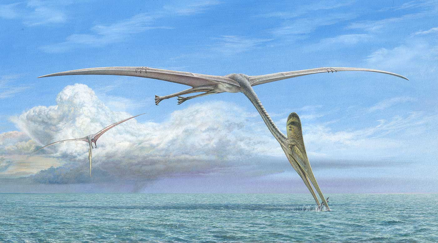 Colour illustration of a large bird-like marine reptile flying over water. Its long neck extends to the water, where a fish is caught in its beak-like mouth. A second bird-like reptile flies in the background. - click to view larger image
