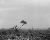 Black and white artwork featuring a tree in a dismal looking landscape