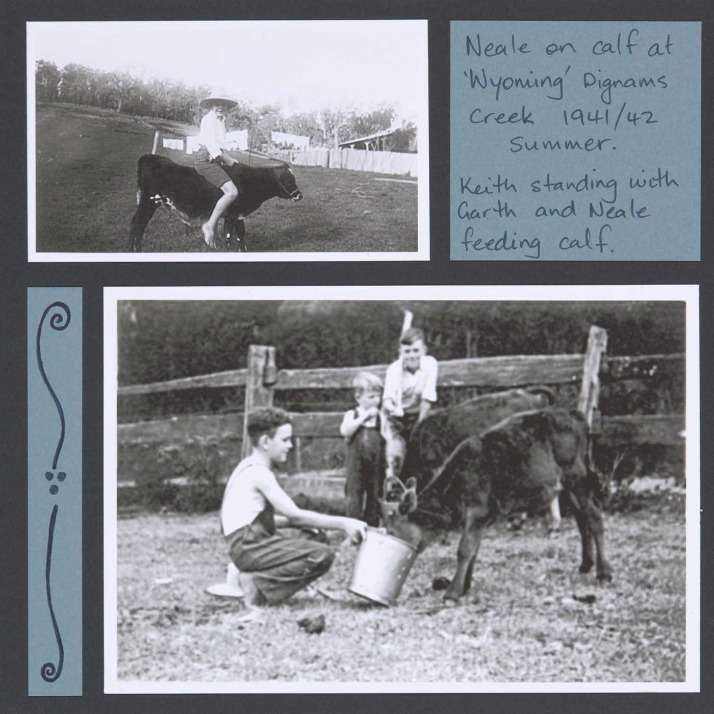 Neale's first rough-riding experiences, and learning care of cattle - click to view larger image