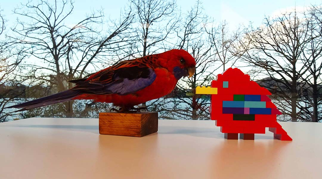 Taxidermy rosella with LEGO brick model of a rosella - click to view larger image
