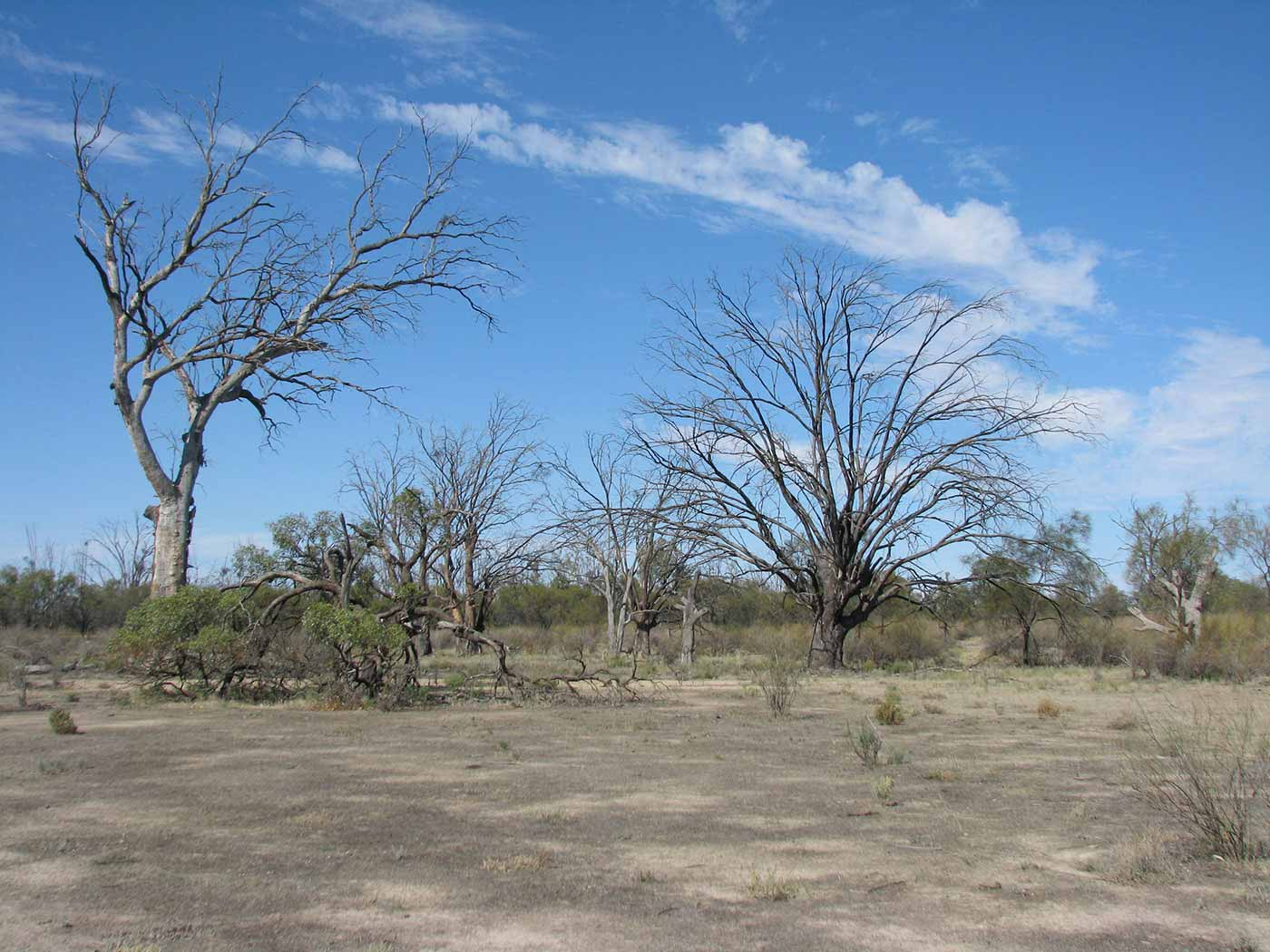 Colour photograph of dry land and trees. - click to view larger image