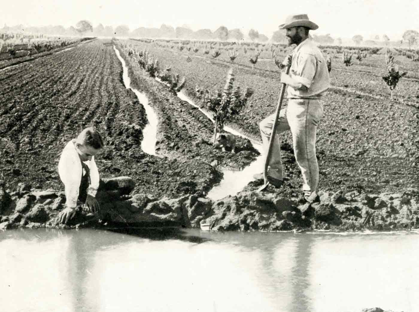A man stands in a field, resting his foot on a shovel. Another man sits in the foreground. The field has rows of small shrubs with channels of water at the side.