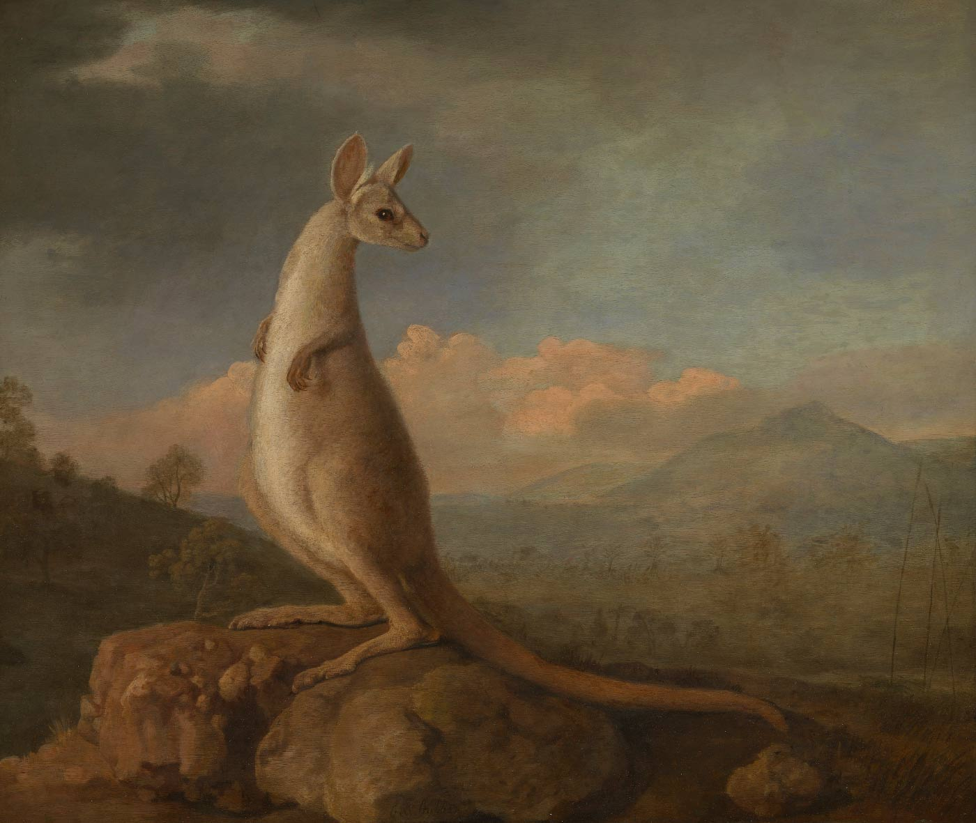 Painting of a kangaroo standing on a rock with a rural landscape in the background. - click to view larger image