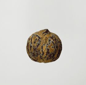 Walnut-shaped nut. Light-brown in colour and badly splintered in places.