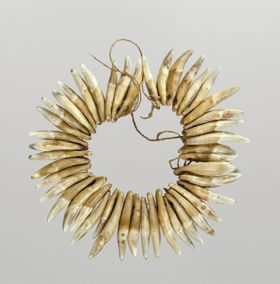 Necklace made from dog teeth and strung together on a cord consisting of a plant material.