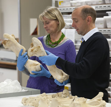 A man and a woman each holds and examines a large bone.