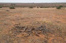 Landscape image showing red plains with sparse vegetation.