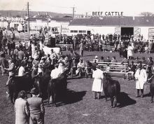 Black and white photograph of people gathered around a grass field. Several men wearing white overcoats stand beside beef cattle. Crowds of people, standing and sitting, are watching the judging.