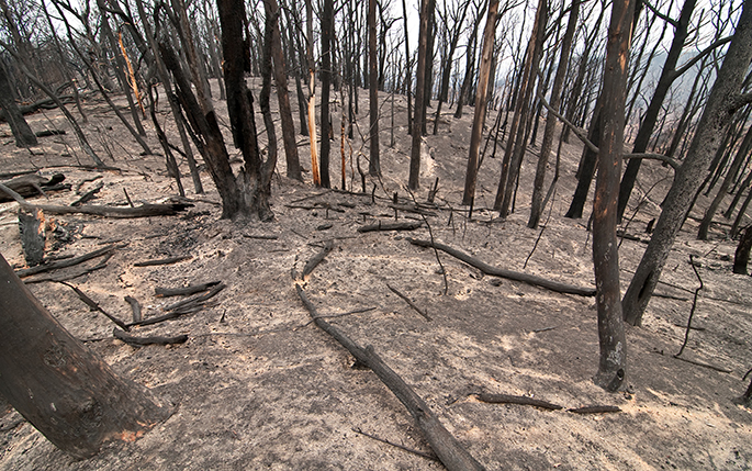 Remains of bush following Black Saturday fires