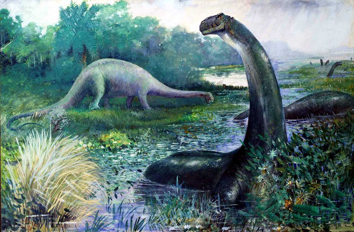 Illustration of dinosaurs and a waterway. One large four-legged dinosaur grazes at the water's edge. Several others are submerged in water. One in the foreground has its long neck extended well above the surface. - click to view larger image