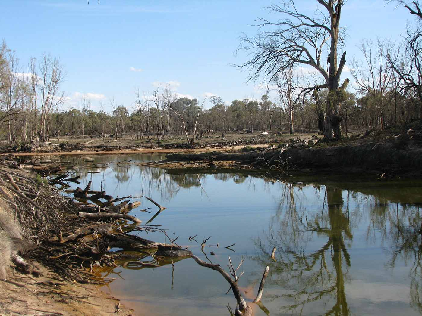 A colour photograph of a river with dead trees and branches on either side. - click to view larger image