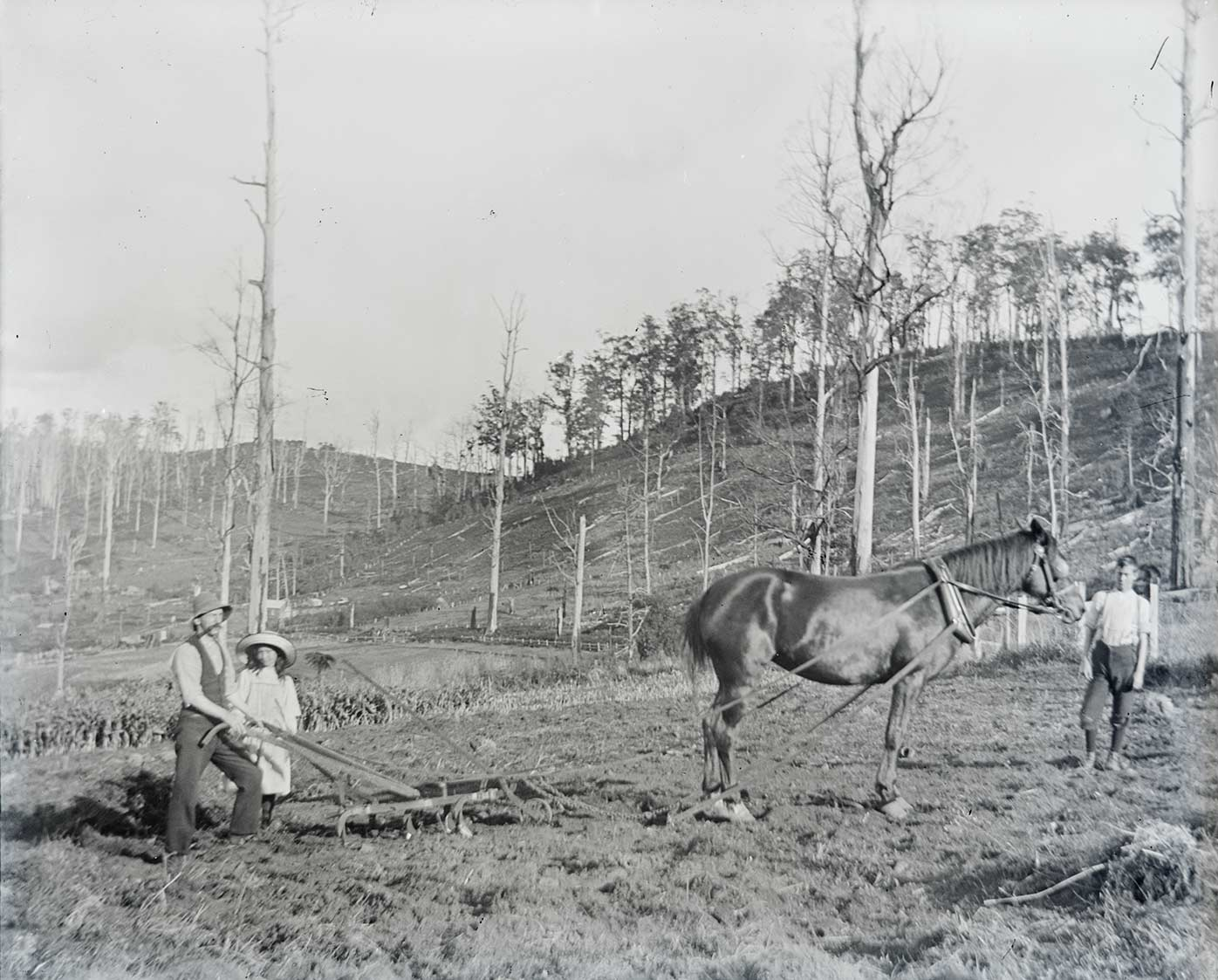 Black and white photo of a man tending a horsedrawn plough. A girl stands beside the man. Many dead trees stand on hills in the background.