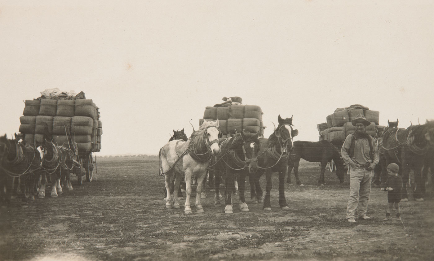 Black and white photo of a man and young child standing before three horsedrawn wagons stacked with wool bales.