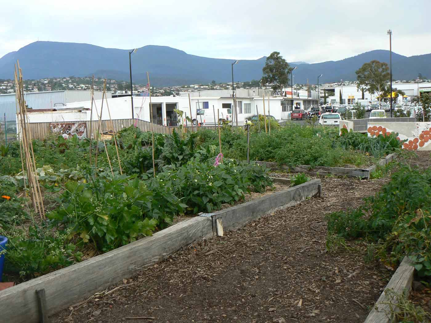 Colour photo of a vegetable garden adjacent to commercial buildings and mountains in the distance.