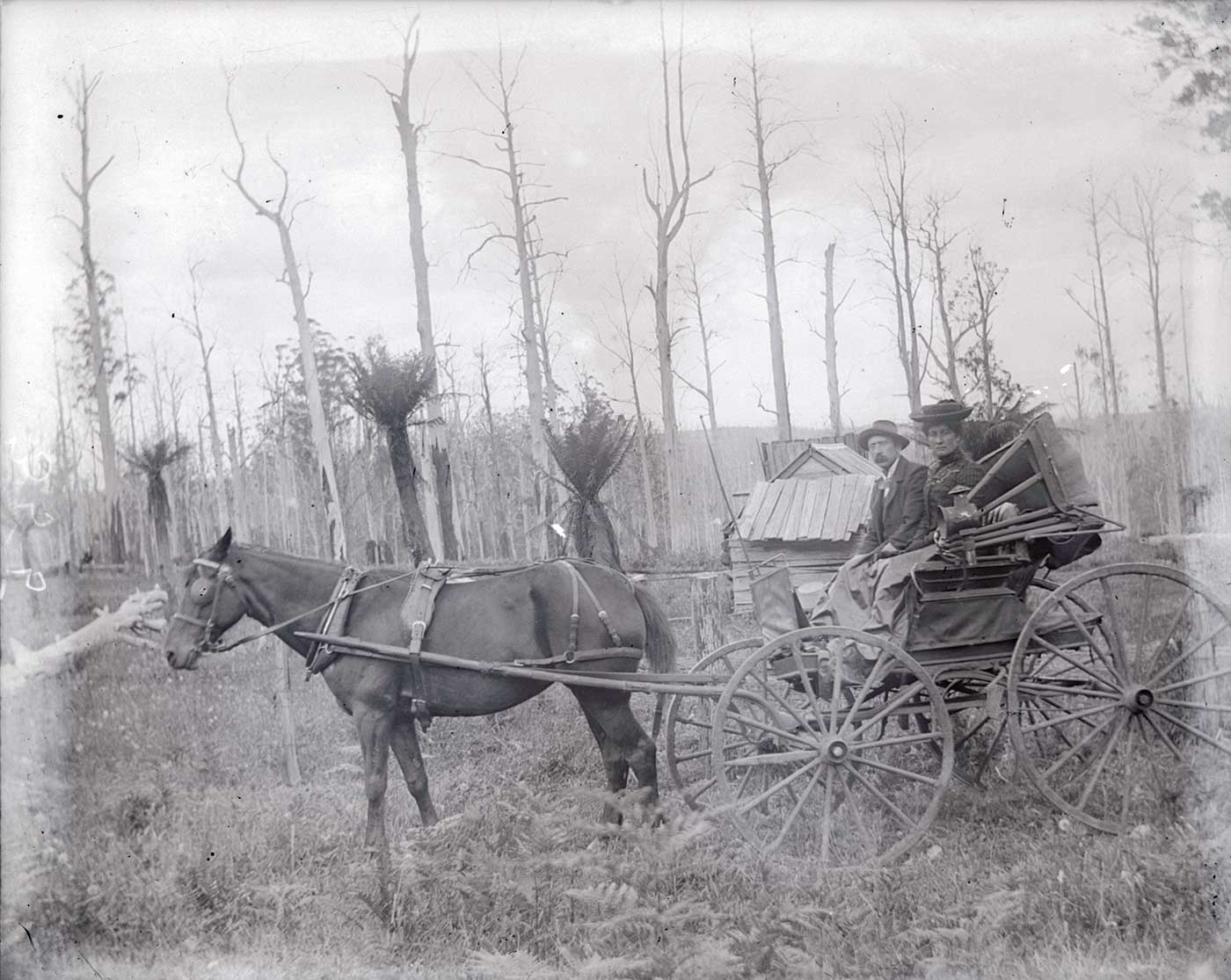 A photographic glass plate negative showing a man and a woman riding in a horse-drawn buggy. In the background is a small wooden building surrounded by tall leafless trees and ferns. - click to view larger image
