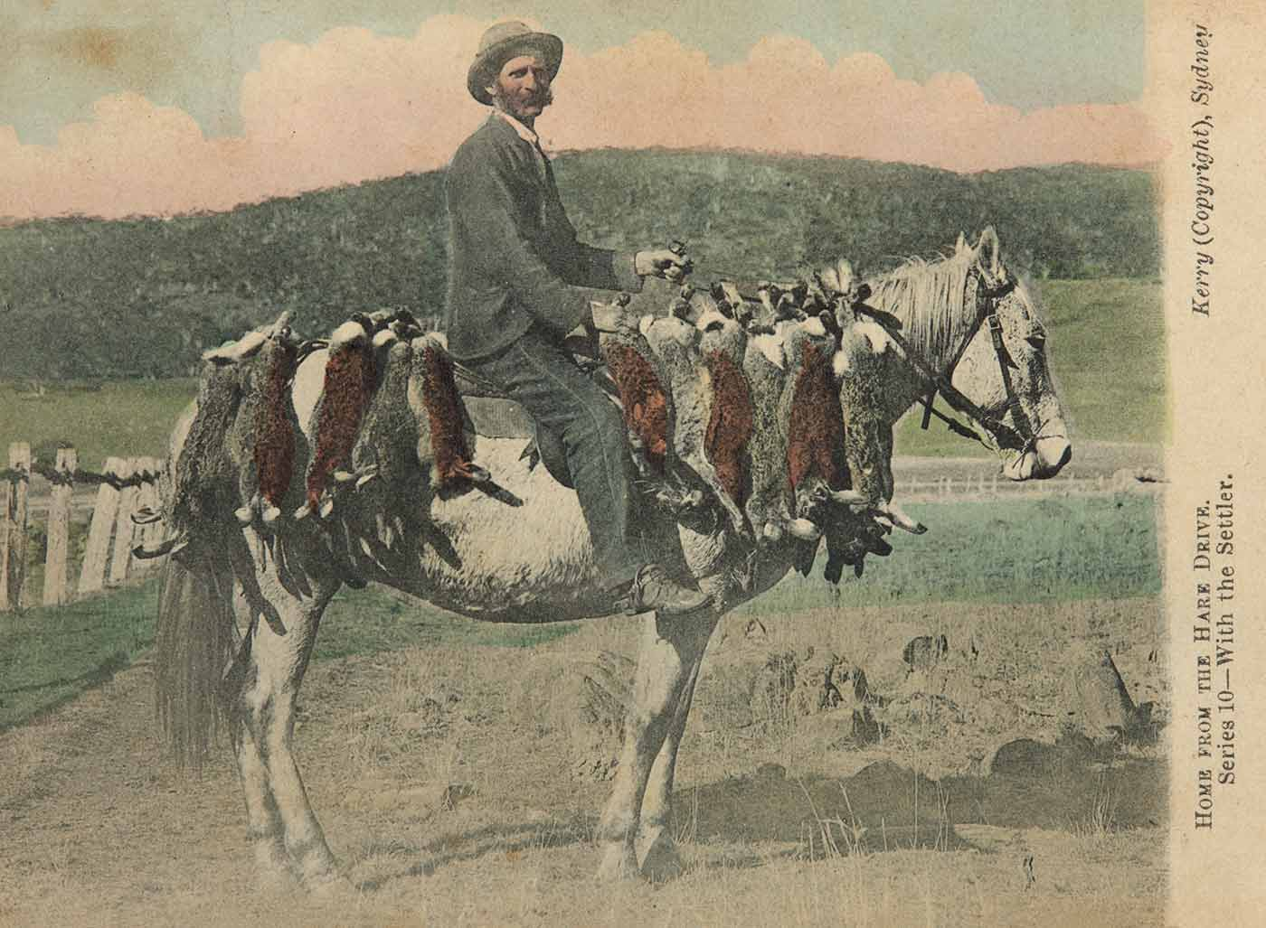 A postcard with hand-coloured photograph of a man on a horse with bundles of dead hares, titled