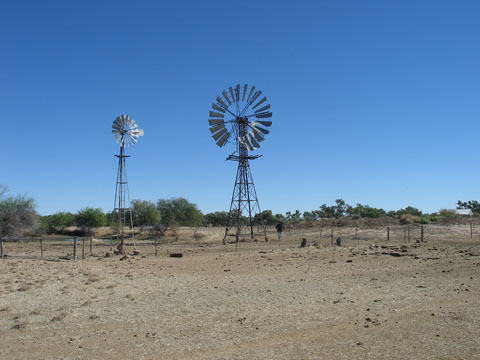 Landscape image showing two windmills, with a small dam to the left, grazing land at the front, scrub on the horizon and a clear blue sky.