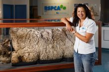 RSPCA CEO Tammy Ven Dange with Chris the Sheep's fleece.