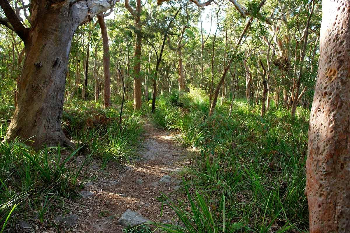 Photo of a pathway through bushland.