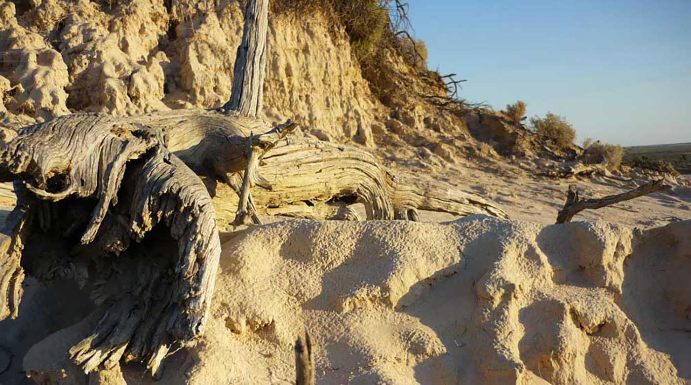 Sandy landscape with gnarled tree stump. - click to view larger image