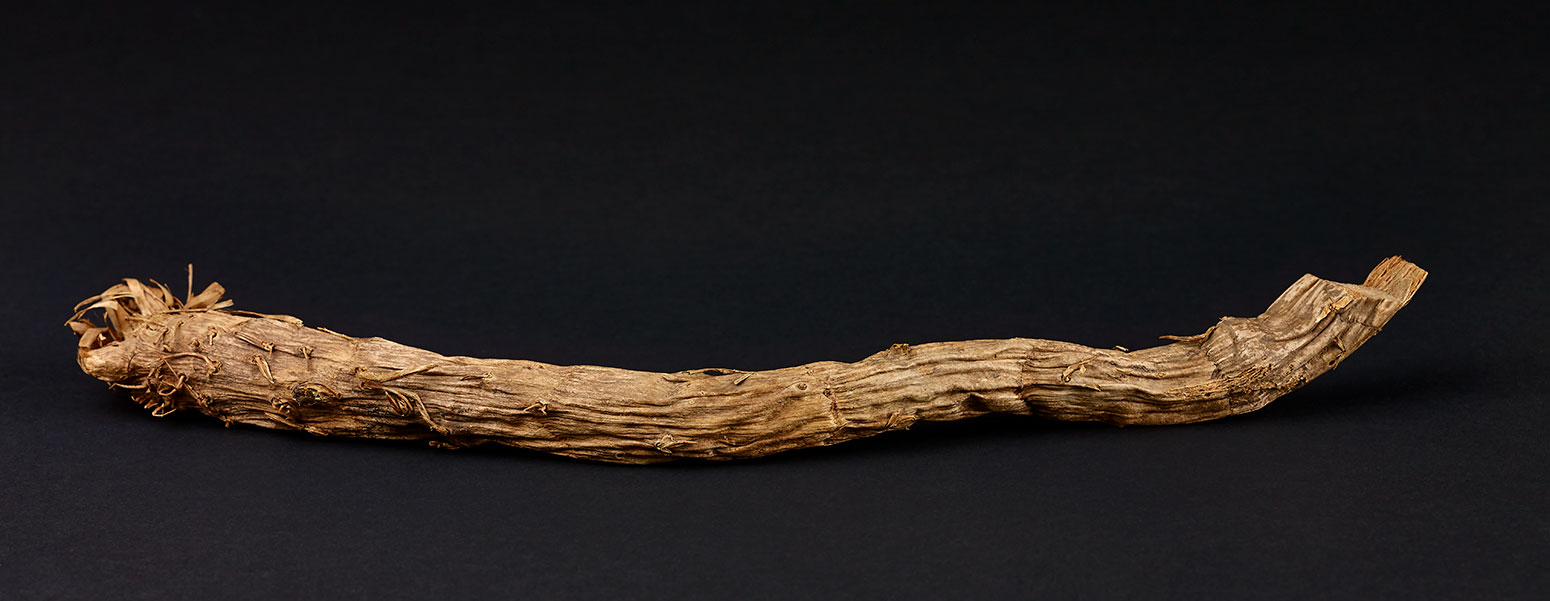 A thin, dried, fibrous piece of root. - click to view larger image