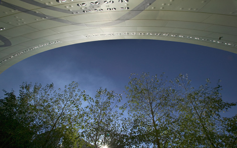 Medium distance images of alder trees, sky with part of the Museum's building arching over the top.