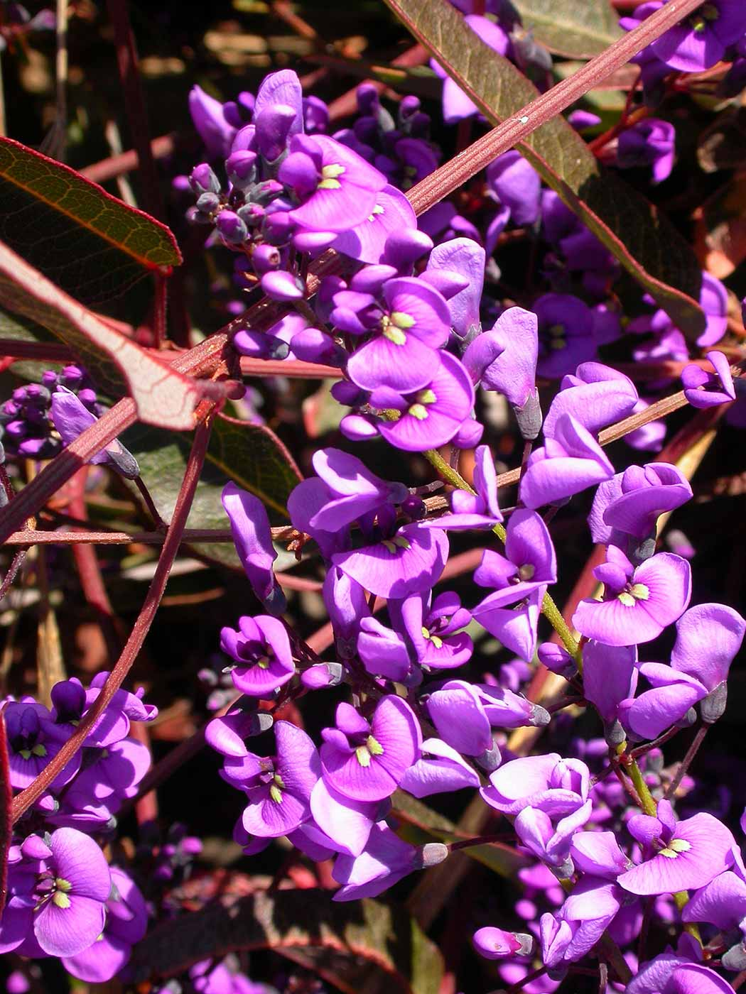 Purple flowers. - click to view larger image