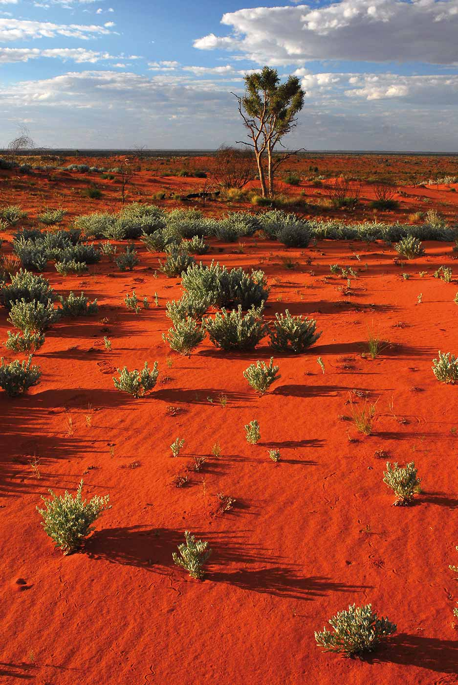 Colour photo of an arid landscape featuring red sand and low lying shrubs. - click to view larger image