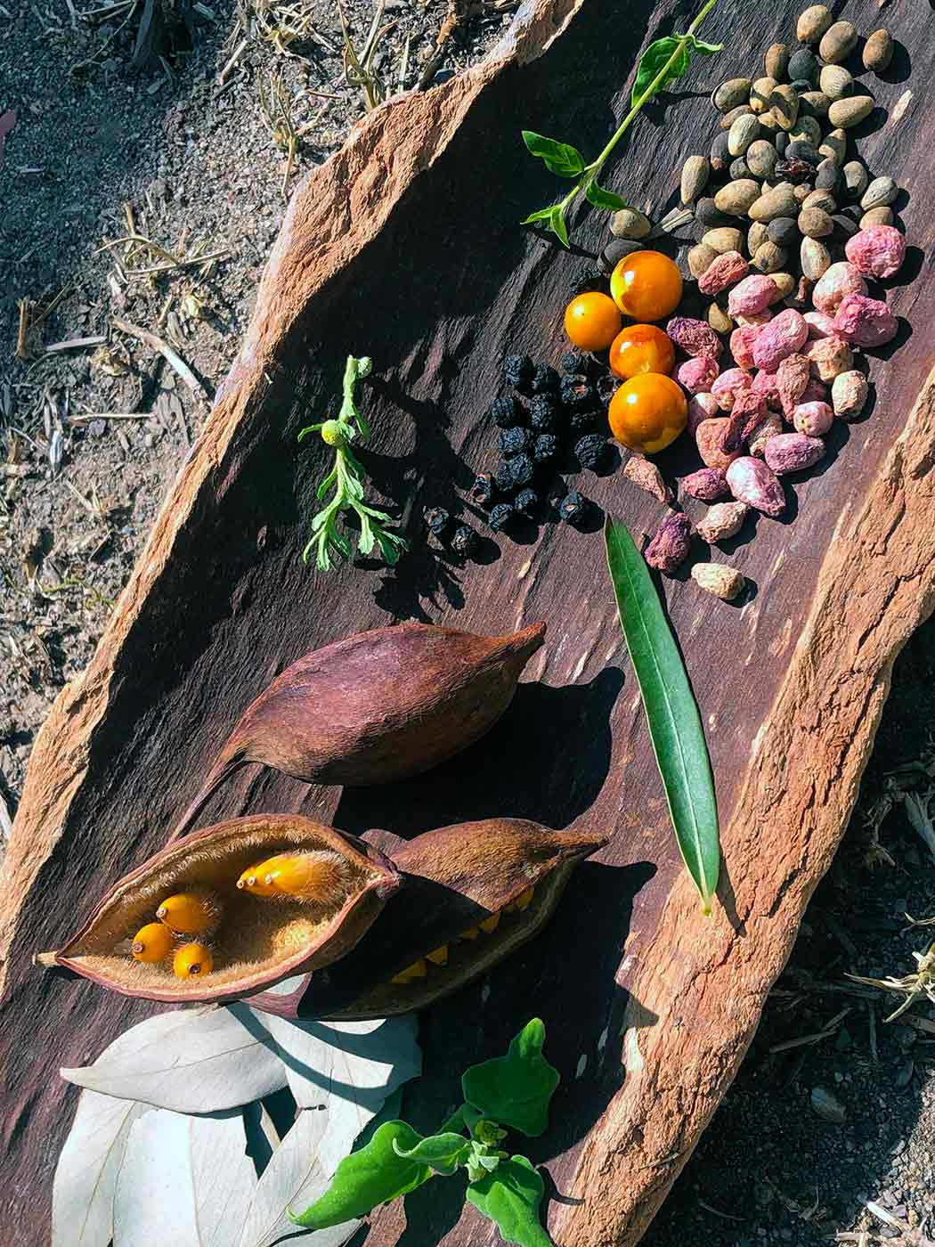 An assortment of bush foods including berries and nuts displayed on a platter made from bark.