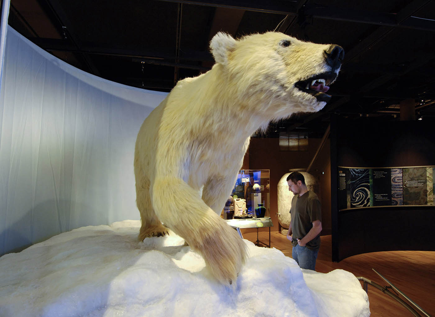 A lifelike model of a white polar bear stands atop an icy mount. A visitor at the right of the image examines a text panel.