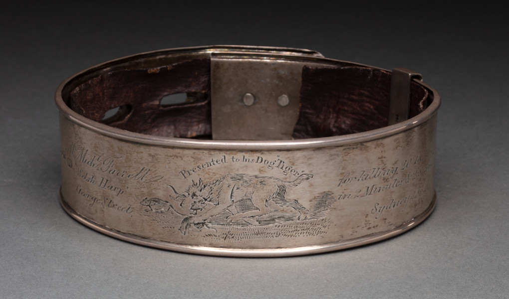 Solid silver dog collar with leather lining. The front is engraved with an image of a dog carrying a rat in its mouth. - click to view larger image