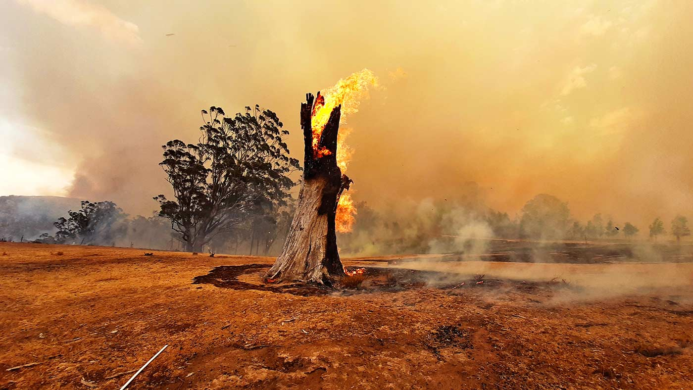 Colour photograph of a burning stump in bushland ravaged by a fire.