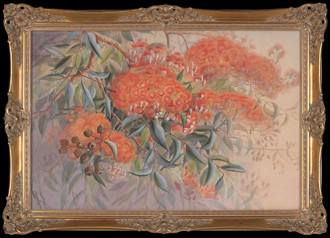 A large water colour of vivid flowering orange blossoms contrasting on a branch with silvery gum leaves and gumnuts. Ornate gilt frame. Marks/inscriptions: Signed Ellis Rowan bottom left hand corner. - click to view larger image