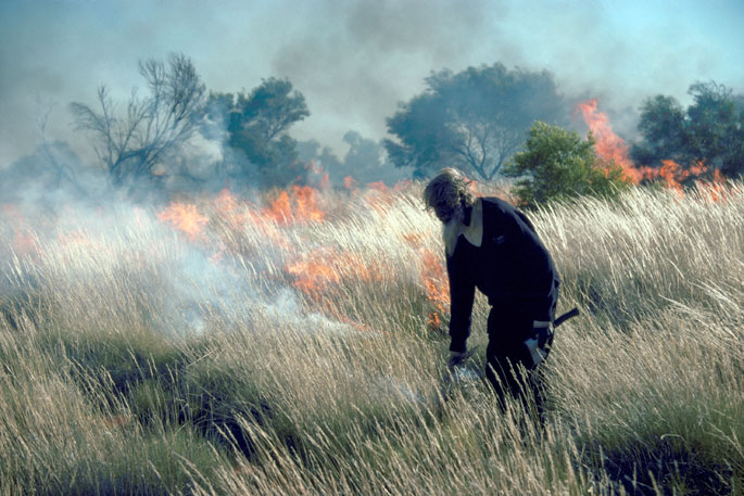 Colour photograph showing a bearded Aboriginal man walking among long grass with a smoking stick. Behind him, the grass is ablaze.