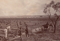 Three men tilling the soil in large paddox while two others look on from other side of a fence. Saplings have been planted in the paddock in long rows.