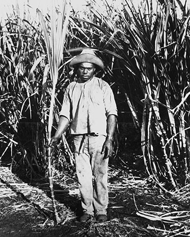 Young man or boy standing in front of tall stands of sugar cane. He is holding a piece of sugar cane. His face is expressionless