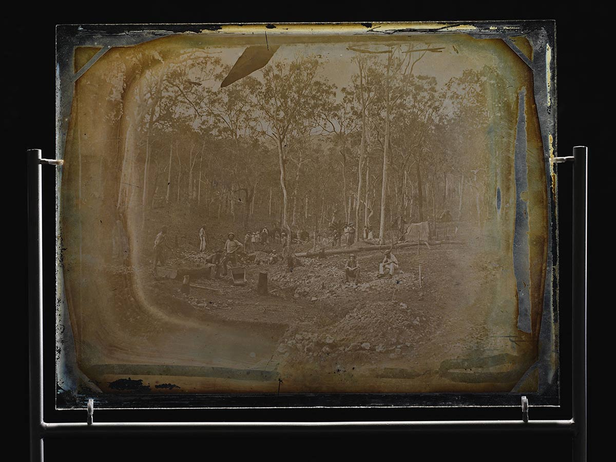 Glass plate showing wide shot of men working in a gully, surrounded by piles of dirt and rock. Several tree stumps appear in the foreground. Numerous large gum trees can be seen in the background. - click to view larger image