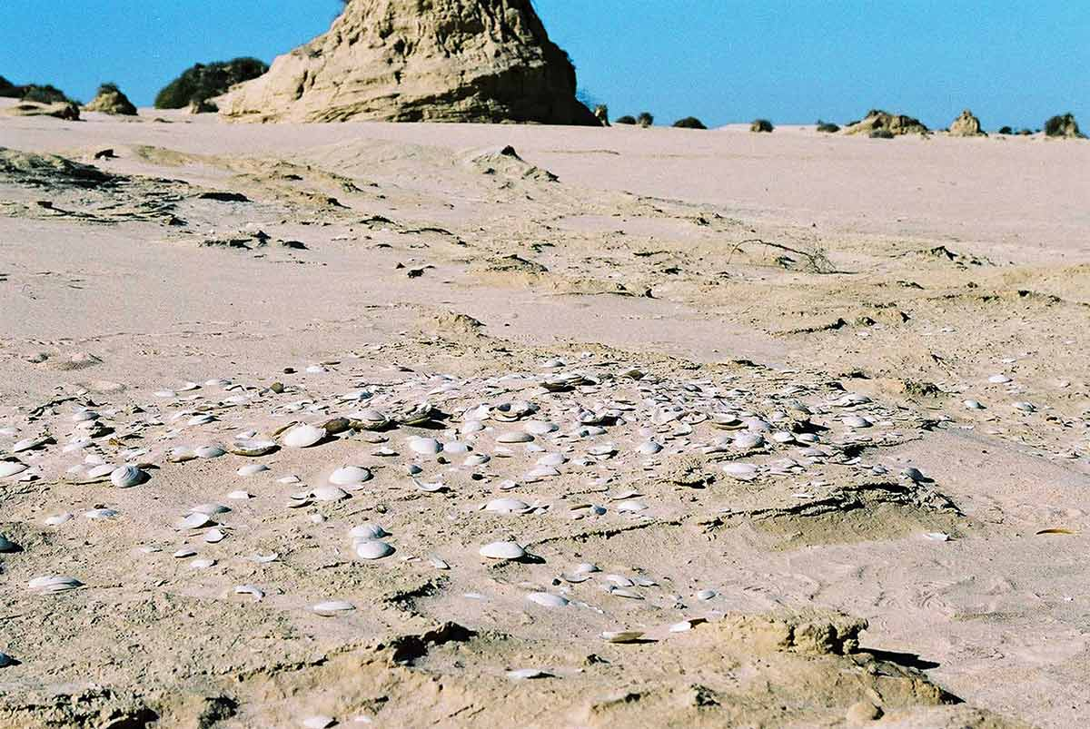 Colour photograph showing sun-bleached shells in the foreground, with sandy dunes stretching to a clear, blue sky. - click to view larger image