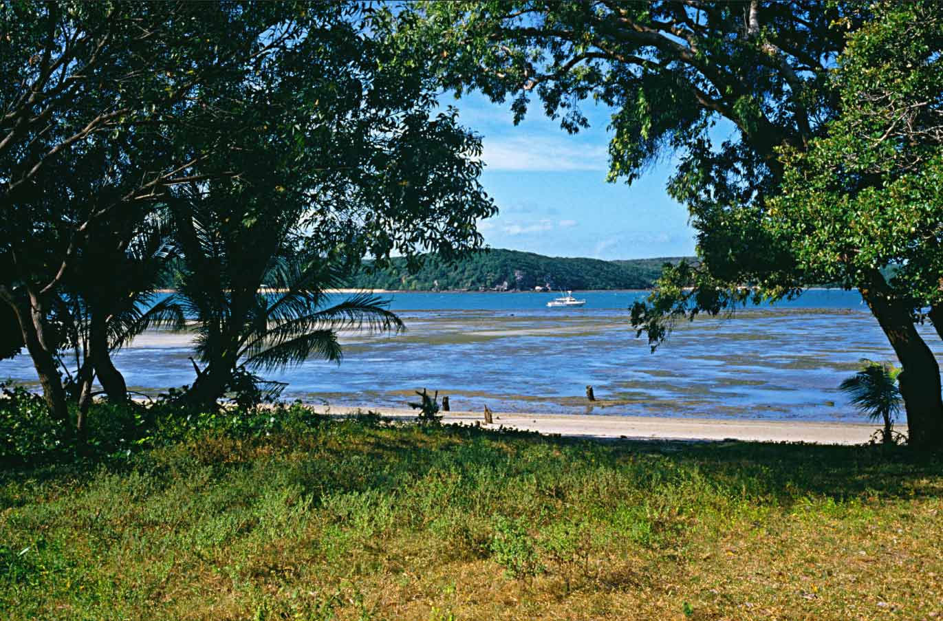 A photo of a green grassy beach with trees on either side allowing a view of the water and a boat. The landmass behind the boat is covered in densely populated trees.