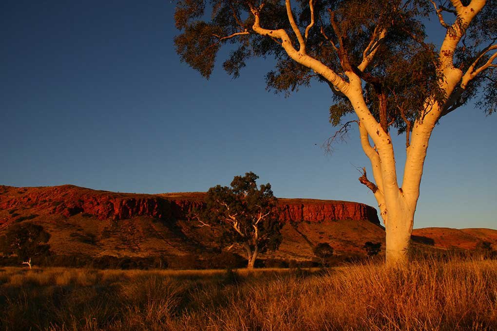 Colour photograph of a landscape with a reddish-brown rocky range in the distance, gum trees and grasses in the foreground and a blue sky beyond. - click to view larger image
