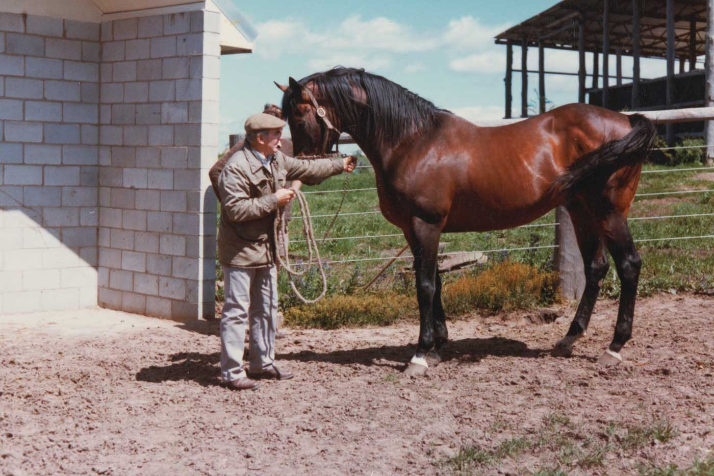 eale with his  Irish thoroughbred, Whiskey Road, who was at stud at Strathallan in the late 1970s and 1980s. - click to view larger image