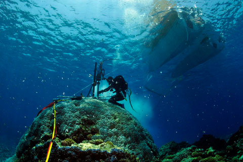 Underwater diver drilling coral.
