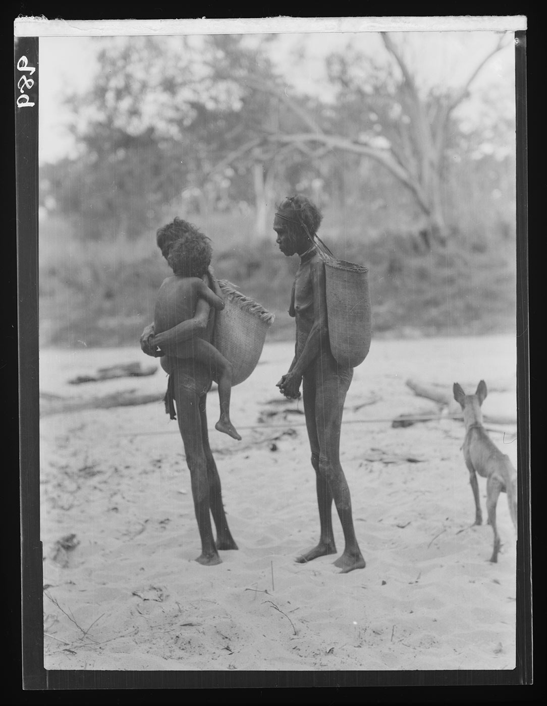 A black and white photograph of two Australian Indigenous women each carrying a large plaited basket suspended from a band around their heads. The woman at left is carrying a child. The ground is sandy and a number of logs and sticks are lying on the ground - click to view larger image